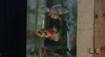 Hotel Adlon Aquarium