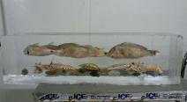 Seafood fest im Eis