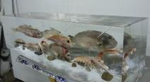 Frischfisch im Eisblock_3