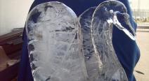 Eisskulptur - Eisschwan_21