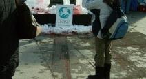 Robbenjagdprotest des IFAW_13
