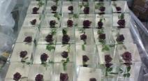 Rosen im Eis_1